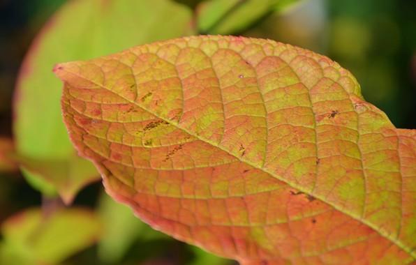 Picture autumn, a fall mood, autumn leaf