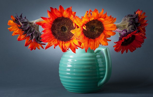 Picture sunflowers, flowers, background, vase
