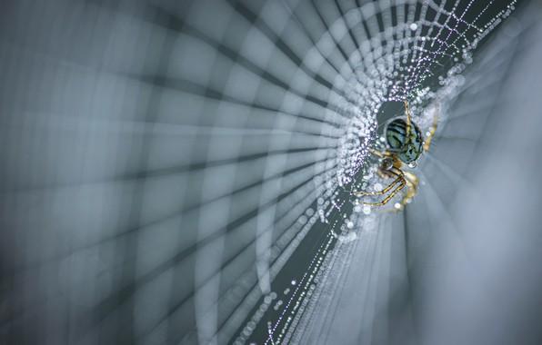 Picture macro, web, spider