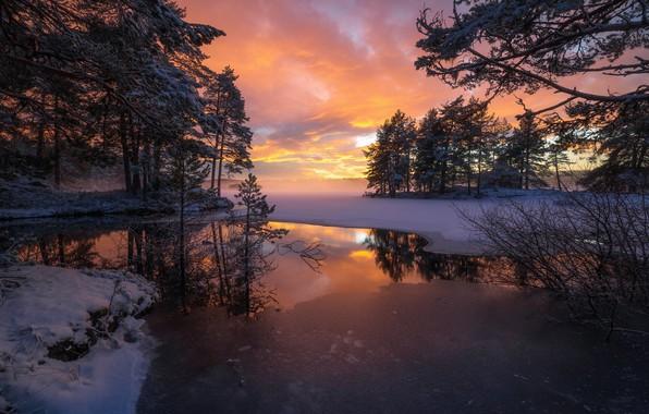 Picture trees, sunset, lake, reflection, Norway, Norway, RINGERIKE, Ringerike