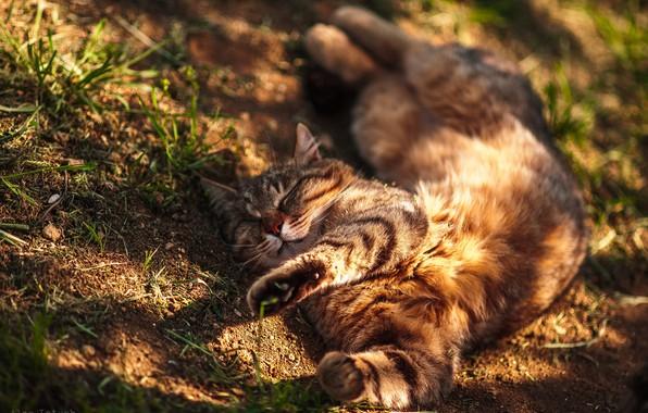 Picture cat, cat, relax, chill, Kote, cat, Alex Lett