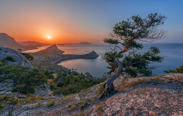 Picture sea, landscape, mountains, nature, tree, rocks, coast, Crimea, pine, Vladimir Ryabkov