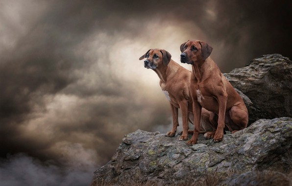 Picture dogs, the sky, look, clouds, clouds, nature, pose, stones, background, open, rocks, together, smoke, two, …