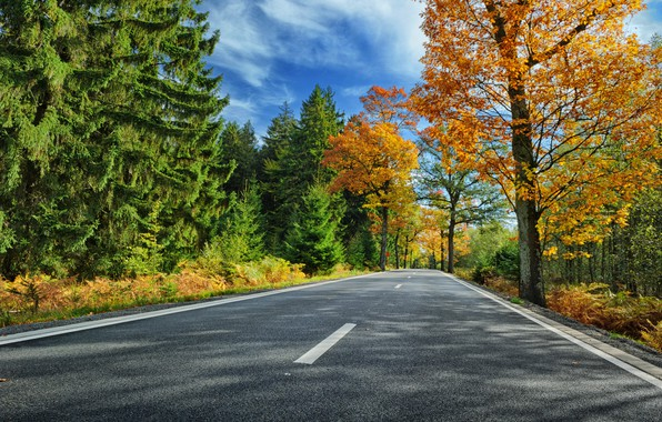 Picture road, autumn, forest, leaves, trees, Park, colorful, forest, road, landscape, park, autumn, leaves, tree, country, ...
