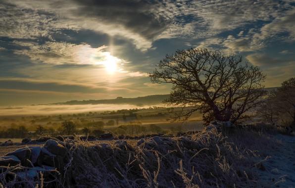 Picture winter, snow, sunset, fog, tree, twilight, oblaka
