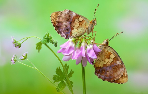 Picture flower, macro, butterfly, photo