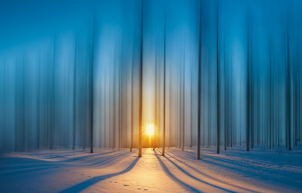 Picture forest, rays, snow, The sun, forest, snow, rays, sun, royhoo
