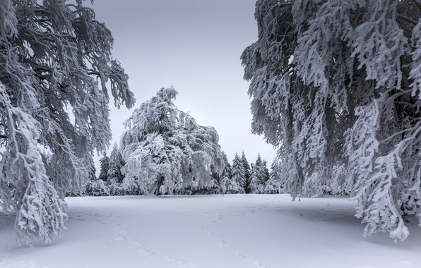 Picture winter, forest, snow, trees, branches