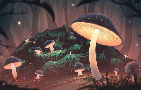 Picture forest, night, mushrooms, glow, art