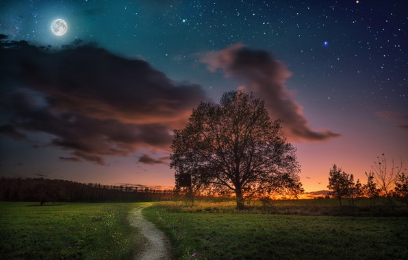Picture the sky, sunset, night, tree, the moon, meadow, track, path, starry sky