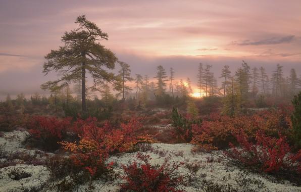 Picture autumn, nature, plants, Trees, Kolyma, Maxim Evdokimov, the lake of Jack London