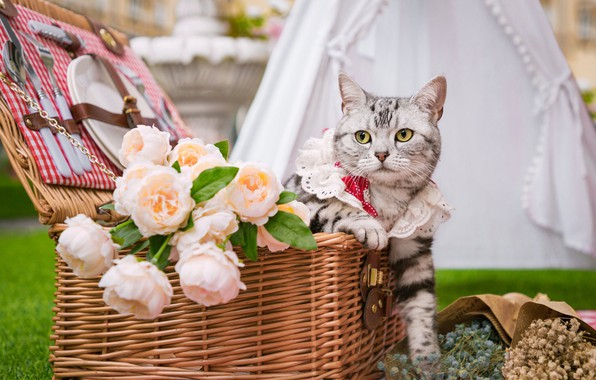 Picture cat, look, flowers, basket