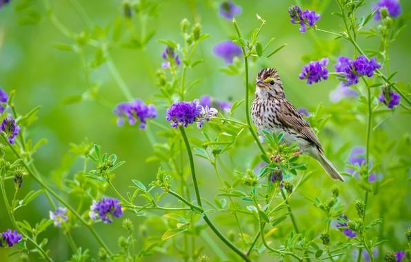 Picture summer, flowers, bird, purple, green background, motley