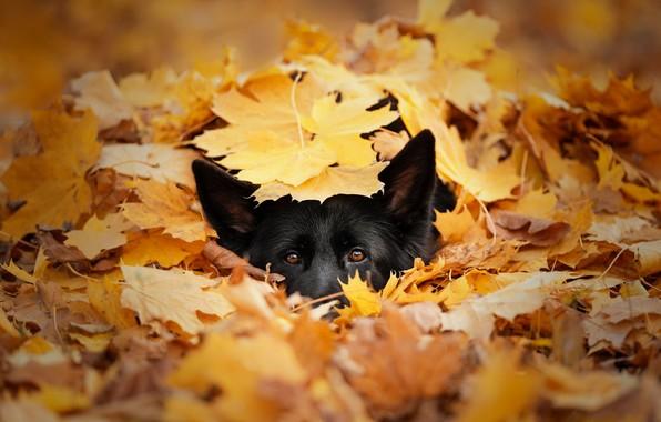 Picture autumn, each, dog
