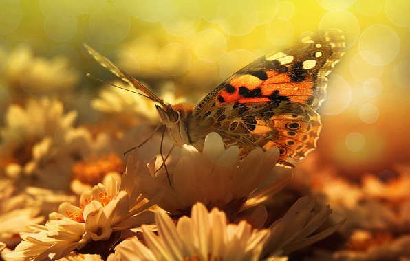 Picture summer, macro, light, flowers, butterfly, wings, petals, insect, white, yellow background, bokeh