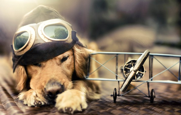 Picture toy, dog, the plane