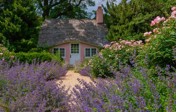 Picture roses, house, lavender