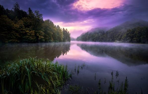 Picture summer, night, fog, lake
