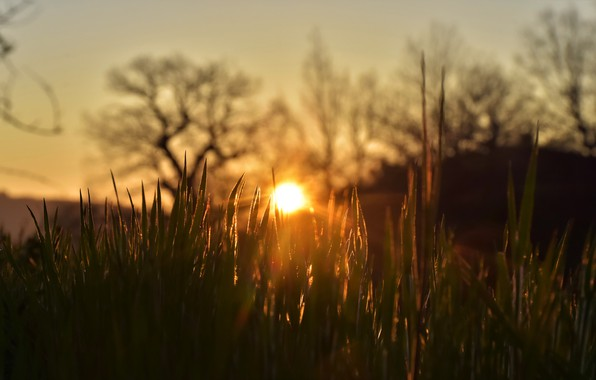 Picture summer, grass, the sun, rays, light, trees, sunset, nature, mood, hills, the evening, haze, blurred …