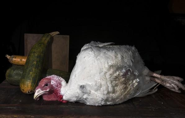 Picture background, bird, Turkey