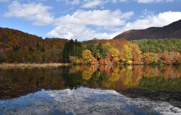 Picture autumn, forest, lake