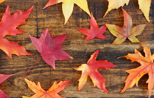 Picture autumn, leaves, background, colorful, maple, wood, background, autumn, leaves, autumn, maple