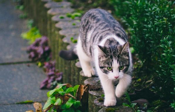 Picture greens, cat, street, striped, walks
