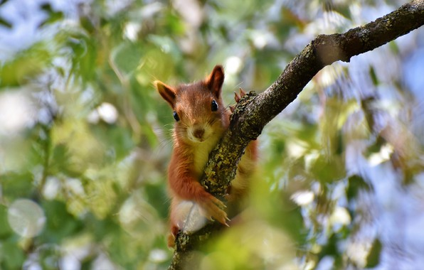 Picture greens, look, leaves, light, branches, background, tree, foliage, portrait, legs, blur, branch, protein, muzzle, red, …