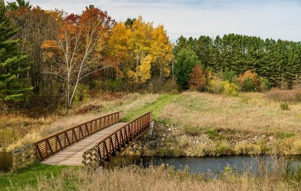 Picture field, autumn, landscape, bridge, nature, river, beauty, space, panorama, birch