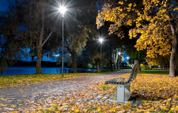 Picture foliage, the evening, lights, promenade, bench