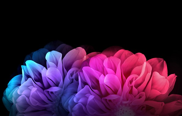 Picture flowers, rendering, petals, black background, picture, dahlias, floral fantasy, the rainbow flares