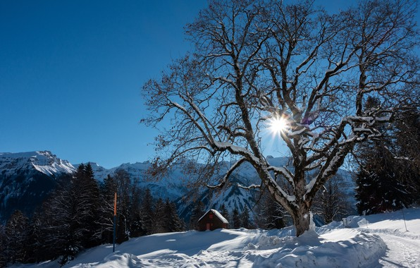 Picture winter, forest, the sky, the sun, rays, snow, trees, mountains, rocks, Switzerland, Alps, house, Braunwald