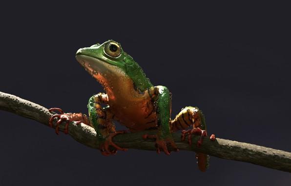 Picture frog, art, Alessandro Mastronardi, Amazon tree frog: tiger stripes color variation