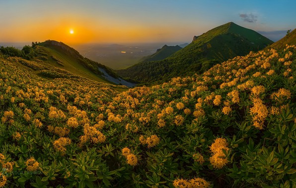 Picture sunset, flowers, mountains, nature