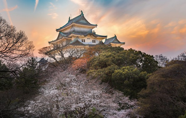 Picture castle, spring, Japan, garden, Sakura