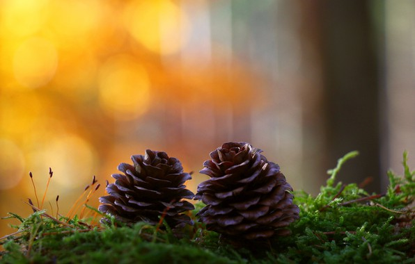 Picture moss, bumps, bokeh