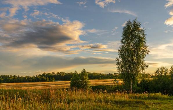 Picture clouds, trees, nature, Berezutski, Alexander