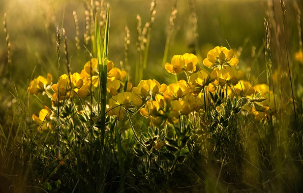 Picture grass, light, flowers, spring