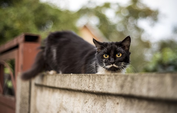 Picture cat, summer, eyes, cat, mustache, look, animal, black, mammal