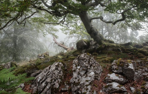 Picture nature, tree, stone