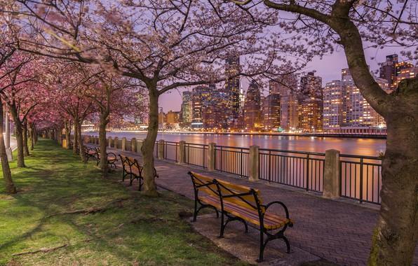 Picture trees, Strait, river, building, home, New York, night city, Manhattan, benches, flowering, promenade, skyscrapers, Manhattan, …