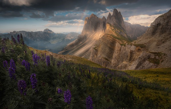 Picture flowers, mountains, rainbow, Alps