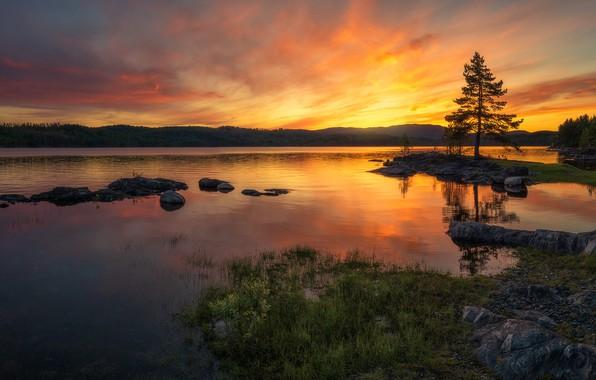 Picture forest, sunset, lake, hills, Norway, Norway, Ringerike, Ole Henrik Skjelstad