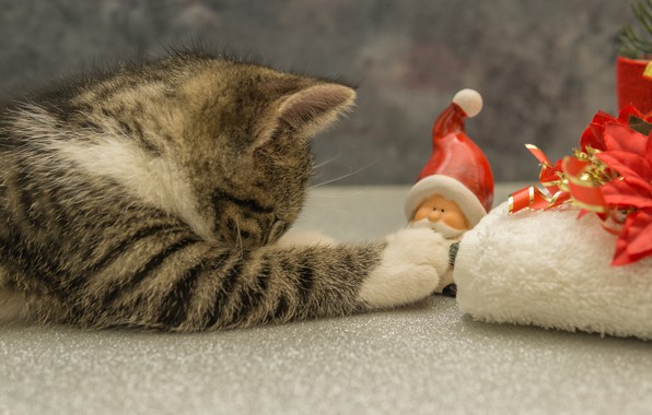 Picture cat, pose, kitty, grey, background, gift, toy, the game, New year, lies, profile, kitty, Santa …