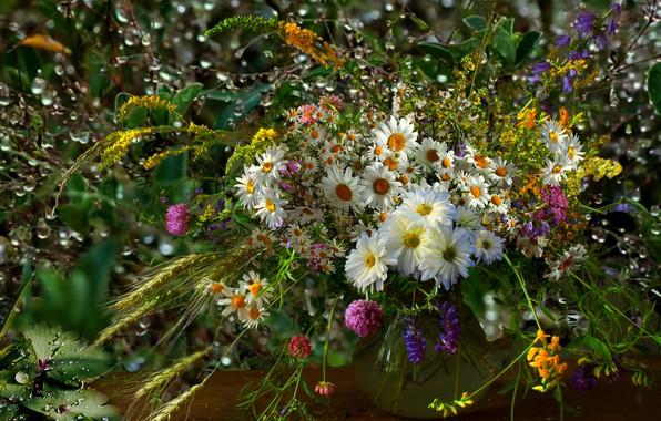 Picture Rosa, chamomile, Bouquet