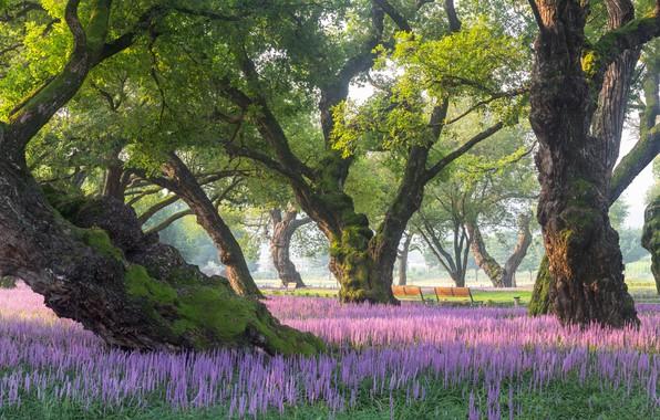Picture trees, landscape, nature, Park, vegetation, benches, flowering, South Korea