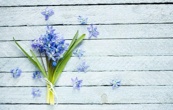 Picture flowers, background, bouquet, violet