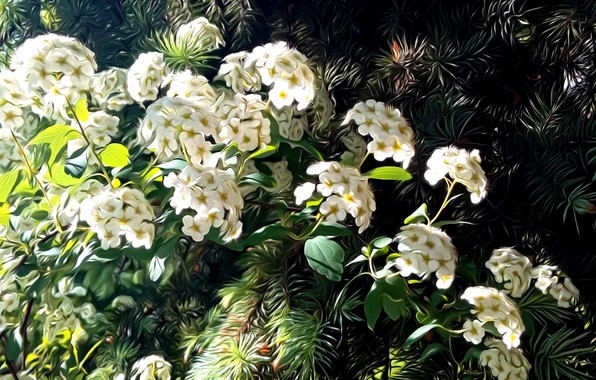 Picture greens, leaves, rendering, spring, needles, picture, white flowers, sunlight, flowering branch, the spring bloom