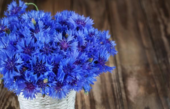 Picture flowers, blue, bouquet, cornflowers