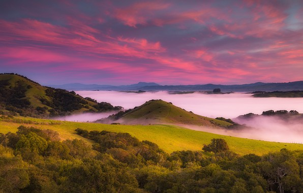 Picture forest, the sky, grass, clouds, trees, mountains, fog, dawn, field, CA, USA, meadows